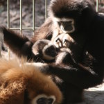 Family time is great at the zoo!