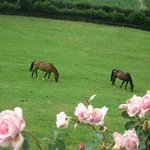 The horses in the adjoining field