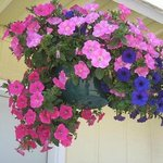 Lots of very pretty hanging baskets of flowers were a nice touch.