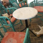 Cretan cats/the coffee bar