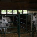 Two of the horses in the barn