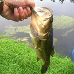 My best catch...a large mouth bass