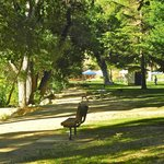 Foto de Kern River Inn Bed and Breakfast