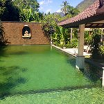 Green swiming pool