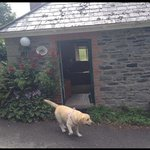 Mount Tavy Cottage의 사진