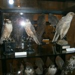 Ornithology Museum