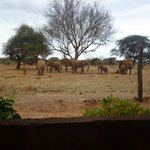 Foto di Red Elephant Safari Lodge
