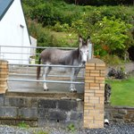 Photo de Tyllwyd Hir Bed and Breakfast
