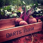 beetroot on darts farm