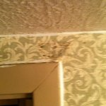 Mold on wallpaper
