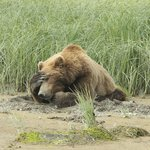 Katmai Wilderness Lodge Foto
