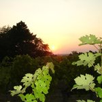 a view from the vineyard at sunset