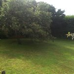 Relax by the apple trees on the lawn