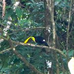 Toucan outside of our room