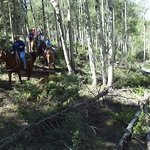 Riding through Aspens and Pines