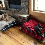 Foto di Barkwells, The Dog Lovers' Vacation Retreat