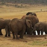 Safari kenya Jafar - Private day tours