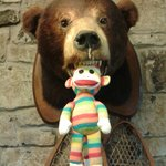 Sock Monkey being drooled on by one of the bears in the inn