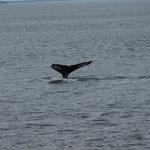 Humpback in Baie St. Catherine
