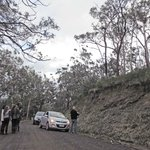 Travelers getting out of cars to peer at koalas high up in the trees!