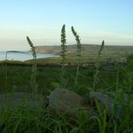 Looking to Ravenscar from Raw