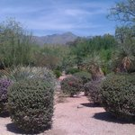 View of Catalina Foothills from a Private Casita