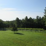 Φωτογραφία: Arcady Vineyard Bed & Breakfast