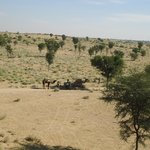 The Beautiful Thar Desert