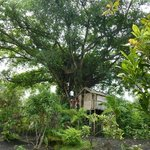 Tanna Tree Top Lodge의 사진