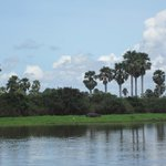 Rufiji River Bank