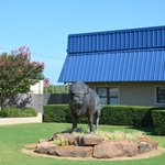 McAlester Bulls - one of several bulls around town