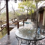 Photo de Simbambili Game Lodge