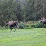 Moose depart after inspecting guests