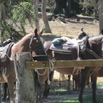 Horses waiting for guests