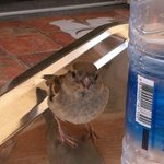 Little Bird that came to visit us