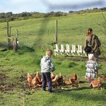 This is just beside the Farm cottage where every day, my children would feed the chooks/get eggs