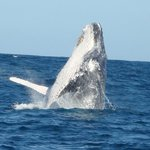 Advantage Tours Whale Watching Foto