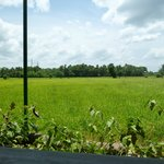 rice paddies by the cottage
