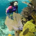 Colorful Shallow Reef Diving