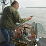 Capt. Ring returns a trapped crab to the ocean.