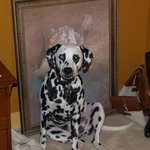 Anya our Dalmation