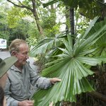 Pete explaining uniqueness of Australian Fan Palm