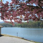 Spring blossoms at Lake Junaluska