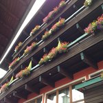 Looking up to the flowered covered balconies