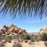 Joshua Tree National Park is breathtaking.