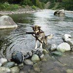 Lots of sticks to play with in the Vedder River