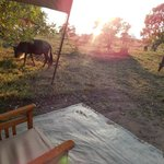 Morning visitors outside of my tent!