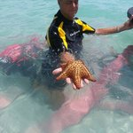 Searching for Star Fish, Sea Turtles & Snorkeling. FUN! Thank You!