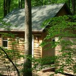 Maple Tree Cabin