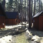 Cabins & Trees along stream